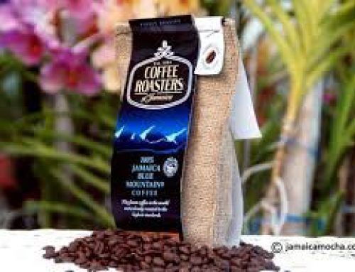 Coffee Roaster 100% Jamaica Blue Mountain Coffee