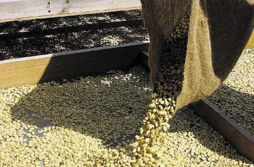 Coffee exporters seek Gov't help to mitigate COVID-19 fallout