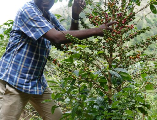 Salada lands in the centre of coffee bailout proposal